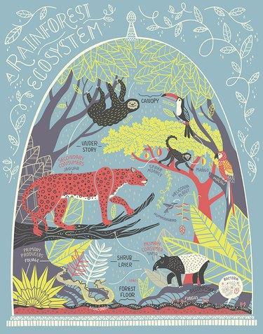 Rainforest ecosystem print