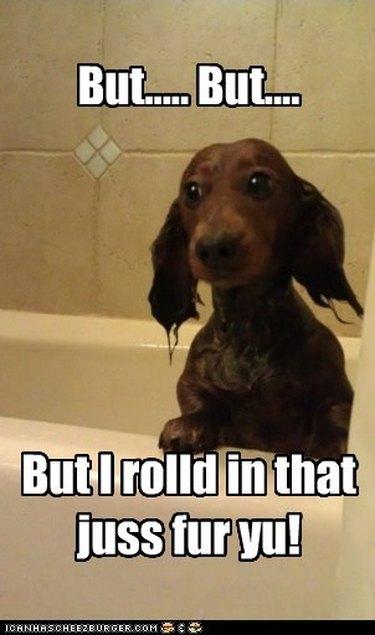 Dog in bath.