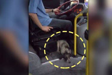 Hero Bus Driver Gives Pups a Free Ride During A Thunderstorm