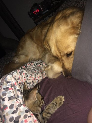 Hed: This Guy's Dog Rescued a Kitten and Begged His Owner to Let Him Keep It