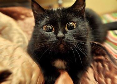 Cat looking sad.