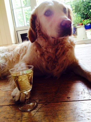 Dog with glass of wine