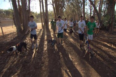 Cross Country Team Shelter Dogs