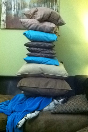Stack of throw pillows on top of dog.