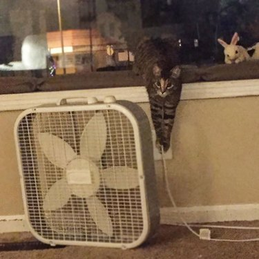 Pets Being Absolute Jerks