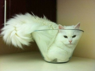 20 Cats Who Think They're Liquid