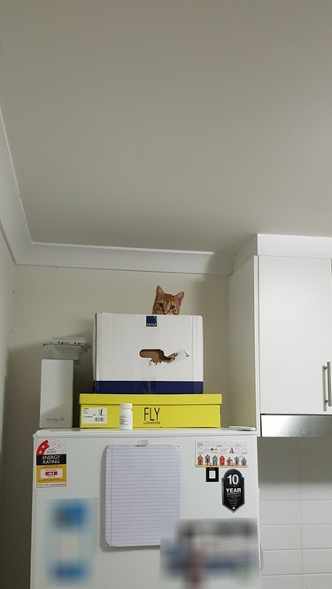 Cat hiding on top of fridge
