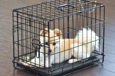 A small dog in a metal cage