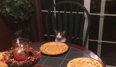 Cat sitting at Thanksgiving table