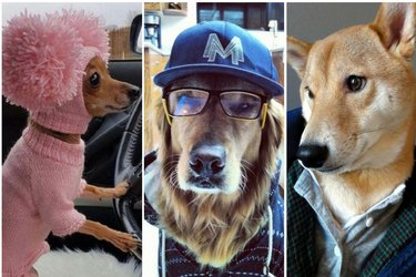 24 Dogs Who Think They're People