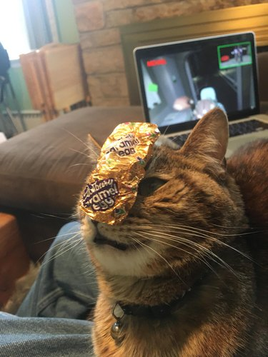 Cat with a Cadberry Egg wrapper on face for some reason