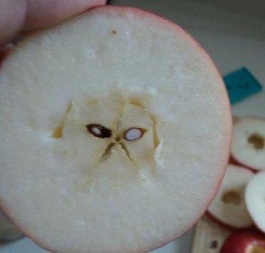 Apple core that looks like a cat
