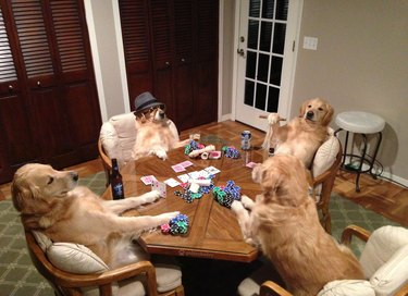 bailey poker paying