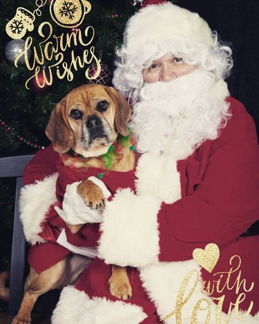 Apathetic dog sitting next to Santa.