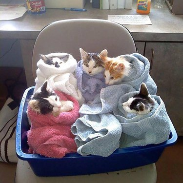 Cat Hates Every Moment Of His First-Time Parents Swaddling Practice