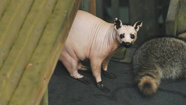 21 Hairless Animals Who Are Totally Confident Naked