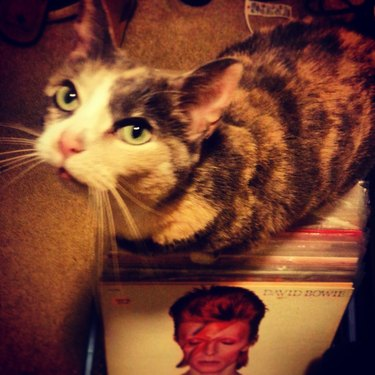 Cat siting on records