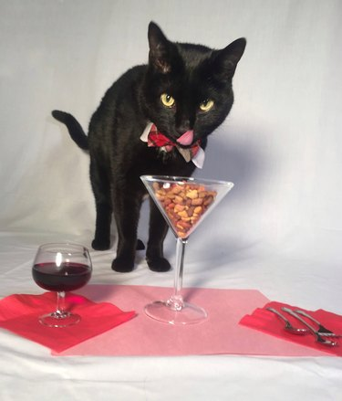 Cat eating food out of martini glass