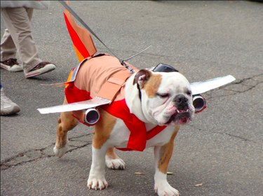 Pets who just flew Spirit Airlines