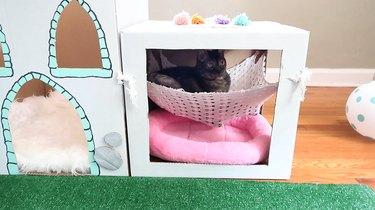 Cat laying in hammock