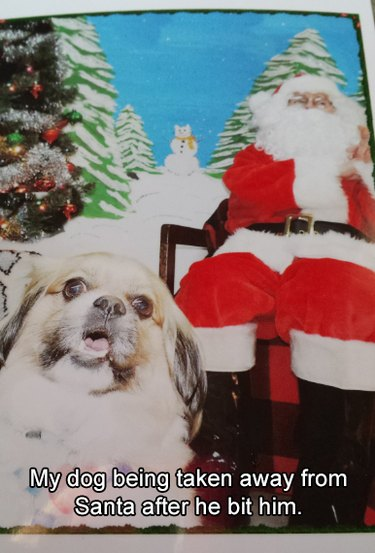 """Dog being carried away from Santa. Caption: """"My dog being taken away from Santa after he bit him."""""""