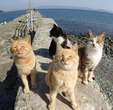 Four cats on a pier.