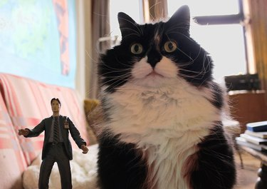 Cat with Mulder action figure