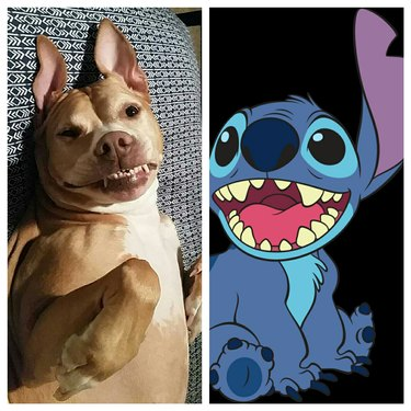 Picture of dog and cartoon alien.