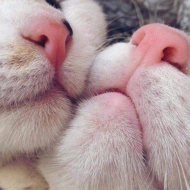 Close up of cat noses!