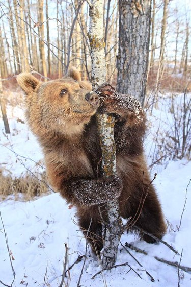 Please, Enjoy This Bear Living Her Best Life After Discovering What Ice Is