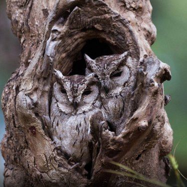 Only hawk-eyed bird lovers will be able to find every owl in these pictures