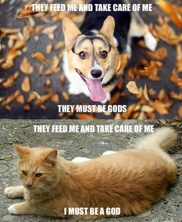 """Meme: Dog; """"They feed me and take care of me; they must be gods."""" Cat: """"They feed me and take care of me; I must be a god."""""""