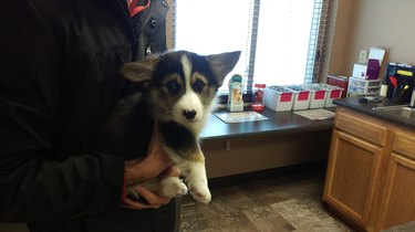 Puppy looking sad at vet's office