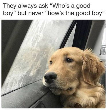"""Dog looking sadly out car window. Caption: They always ask """"Who's a good boy"""" but never """"how's the good boy"""""""