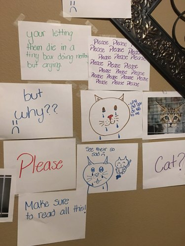 Teen guilt-trips dad into adopting cat with 'Wall of Sorrow'