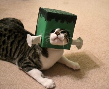 Cat with Frankenstein-inspired box on its head.