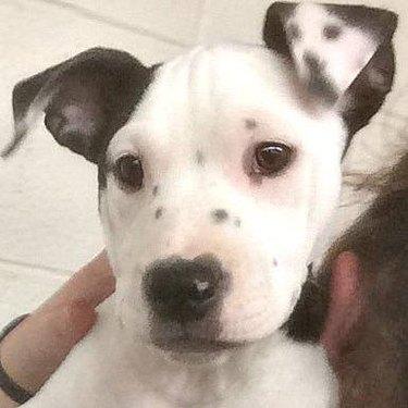 Puppy born with selfie spots on ear flap