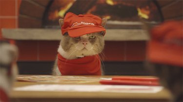 Cat wearing Pizza Hut visor.
