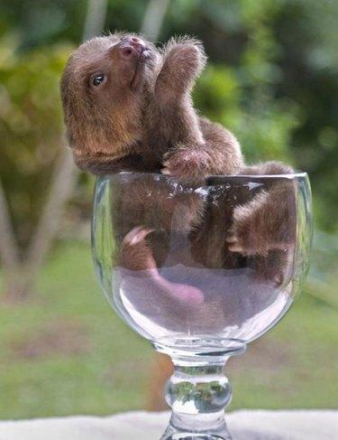 13 Sloths You Won't Believe Exist