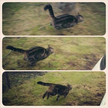 Cat running away