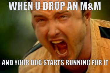 emotional moments all pet owners have experienced