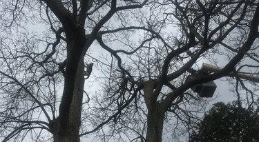cat in tree climbing
