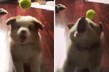 We Wish We Were As Adorable At Failing As This Pupper Is