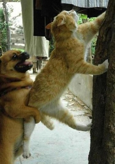 Animals Adorable Working Together