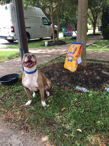 This Dog Was Found Abandoned with a Bag of Food and a Note