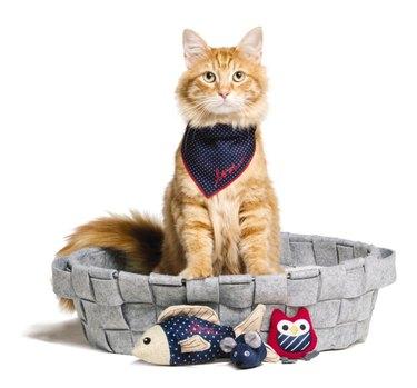 Ellen DeGeneres launches new line of cat toys in partnership with PetSmart