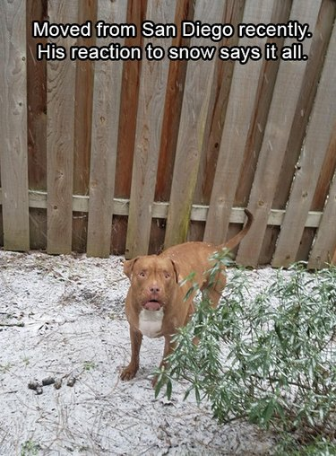 Dog in snow looking freaked out.