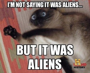 "Siamese cat with text saying ""I'm not saying it was aliens ... but it was aliens."""