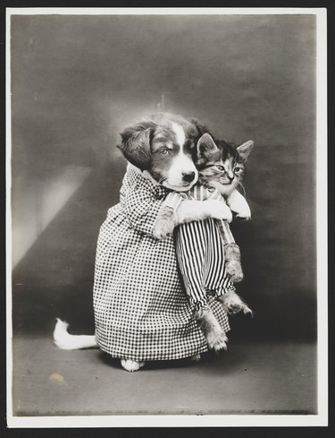 Puppy holding kitten