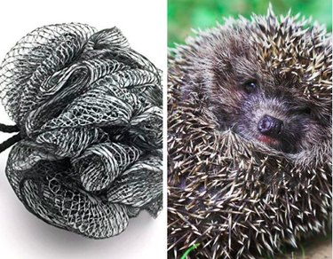 Pets that look like other things